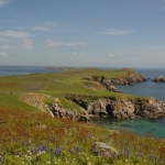 Great Saltee from heavenly gate